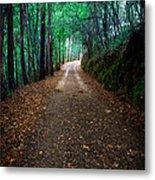Autumn Walks Metal Print