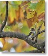 Autumn Warbler Metal Print