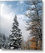 Autumn Winter Colors 2 Metal Print