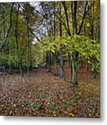 Autumn Woodland Metal Print