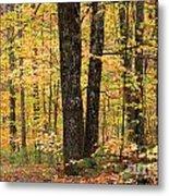 Autumn Woods 1 Metal Print