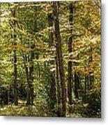 Autumn Woods II Metal Print