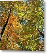 Autumn Woods Sky View Metal Print
