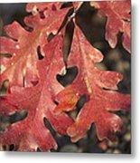 Autumnal Face Metal Print