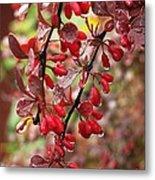 Autumnal Little Wonders_2 Metal Print by Halyna  Yarova