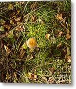 Autumnal Transformation Metal Print