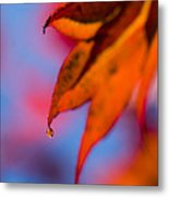 Autumn's Finest Metal Print