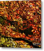 Autumn's Glory Metal Print by Anne Gilbert