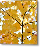 Autumn's Golden Leaves Metal Print by Jennie Marie Schell