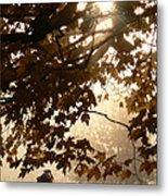 Autumns Golden Morning Metal Print