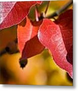 Autumn's Three Graces Metal Print