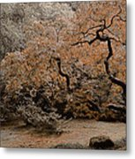 Autumn's Touch Metal Print