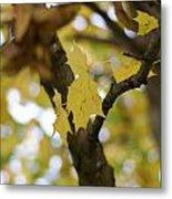 Autumn's Wondrous Colors 1 Metal Print