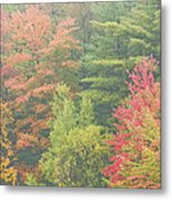 Autumntrees And Fog Metal Print