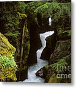 Avalanche Creek Glacier National Park Metal Print