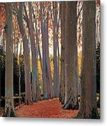 Avenue Of Plain Trees Metal Print