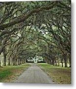147706-avenue Of The Oaks  Metal Print