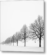 Avenue With Row Of Trees In Winter Metal Print