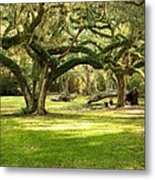Avery Island Oaks Metal Print