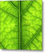 Avocado Leaf Metal Print