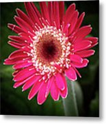 Awake And Ready For The World Metal Print