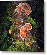 Awe Inspiring Fungi Metal Print