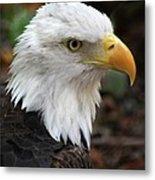 Awesome American Bald Eagle Metal Print