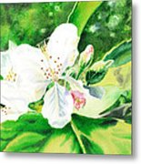 Awesome Apple Blossoms Metal Print