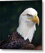 Awesome Eagle Metal Print by Tammy Smith