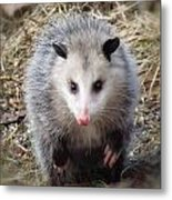 Awesome Possum Metal Print
