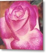 Awesome Rose Pristine Metal Print by Robert Bray