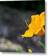 Awesome Yellow Flower Metal Print by Jason Brow