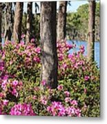 Azalea At The Lake Metal Print