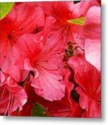 Azalea Flowers Metal Print