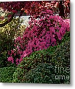 Azaleas And Red Maple Tree Metal Print