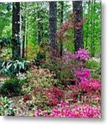 Azaleas Red Maple And Magnolia Trees Metal Print