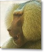 Baboon In The Sun Metal Print