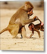 Baboon With Baby Metal Print