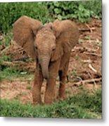 Baby Africa Elephant, Samburu National Metal Print