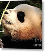 Baby Bear Bamboo Inspection Metal Print