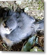 Baby Bird Learns A Lesson Metal Print
