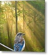 Baby Blue In Morning Fog Sunlight Metal Print