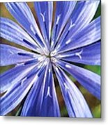 Baby Blue Metal Print by Molly McPherson