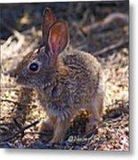 Baby Bunny Metal Print