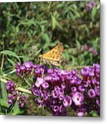 Baby Butterfly Metal Print