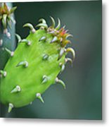 Baby Cactus - Macro Photography By Sharon Cummings Metal Print