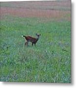 Baby Deer At Sunrise Metal Print