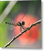 Baby Dragonfly Metal Print