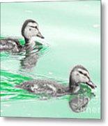 Baby Ducklings Metal Print