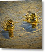 Baby Ducks Metal Print